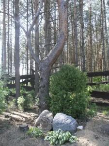 Stovyklavietė miško monai (1)